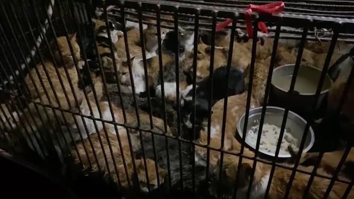 广东蓬江通报禽畜市场有被盗猫只交易:已查扣,正核查来源