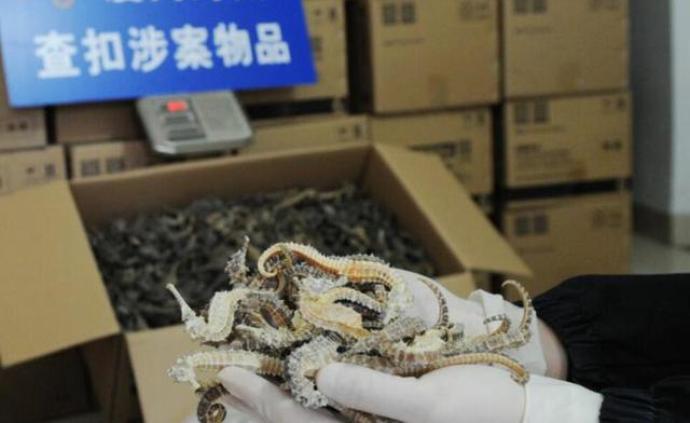 全国海关打击野生动物及其制品走私,查获海马干、绿鬣蜥等