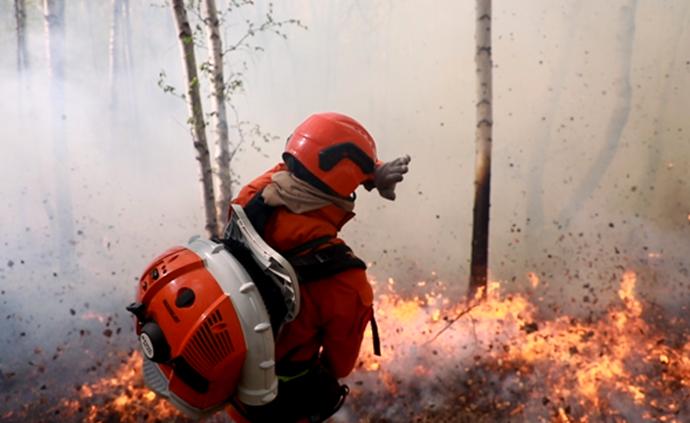"""林中路 动画解析这些""""扑不灭""""的山火"""
