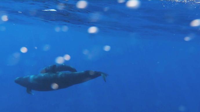 南海寻鲸记:鲸类科考对我们意味着什么
