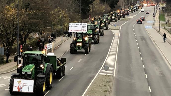 """丹麦""""水貂门"""":农民开拖拉机进城抗议政府扑杀逾千万只水貂"""
