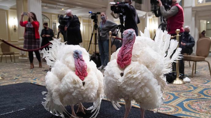 早安·世界|美国一对感恩节火鸡入住豪华酒店,将被总统赦免