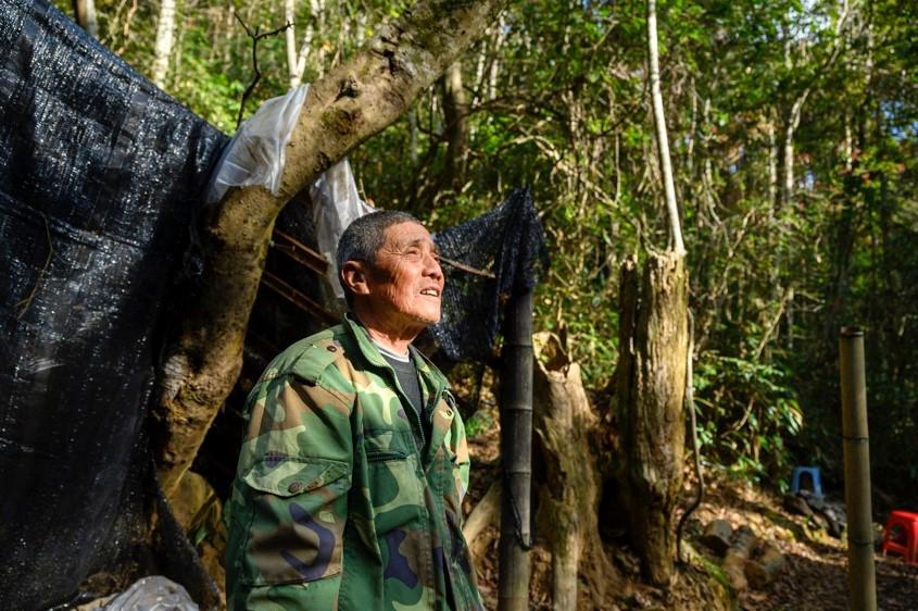 11月26日,杨美林观测完后看着白鹇步入森林深处。