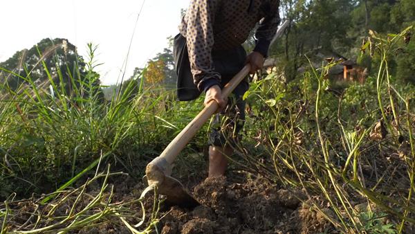 11月初,范家发在地里挖花生。 赵志远 摄