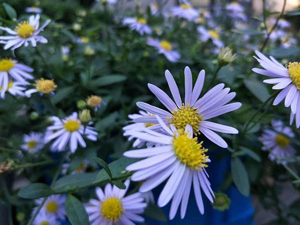 小雪拍到的小区公园里盛开的花 本文图片均由 小雪 提供