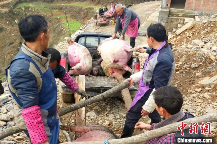 乡亲们帮忙将死猪运出圈舍,按规定进行掩埋。 白川东 摄