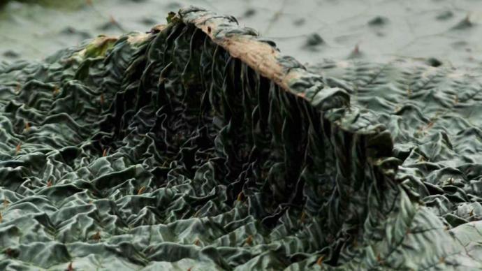 攝影師|涂序理:芡實之美,鄱陽湖區樸素而自在的生命