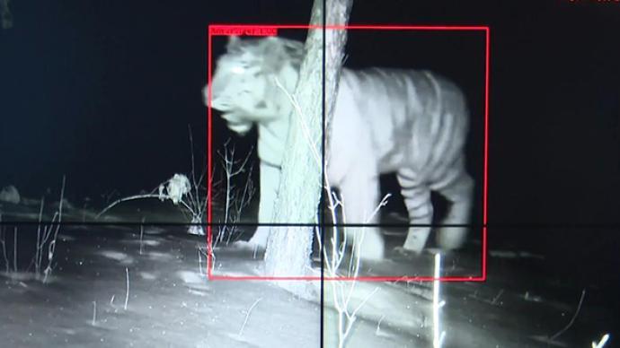 吉林大興溝林區首次拍攝到野生東北虎實體影像