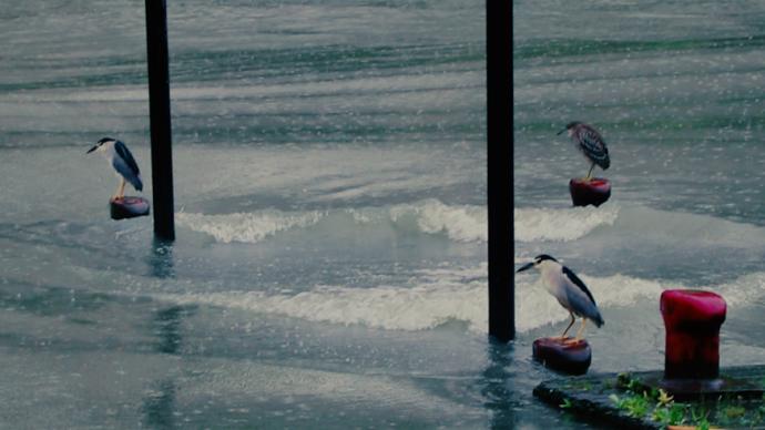 沿蘇州河而行·循聲|蘇州河的水質治理和城市人的自然觀