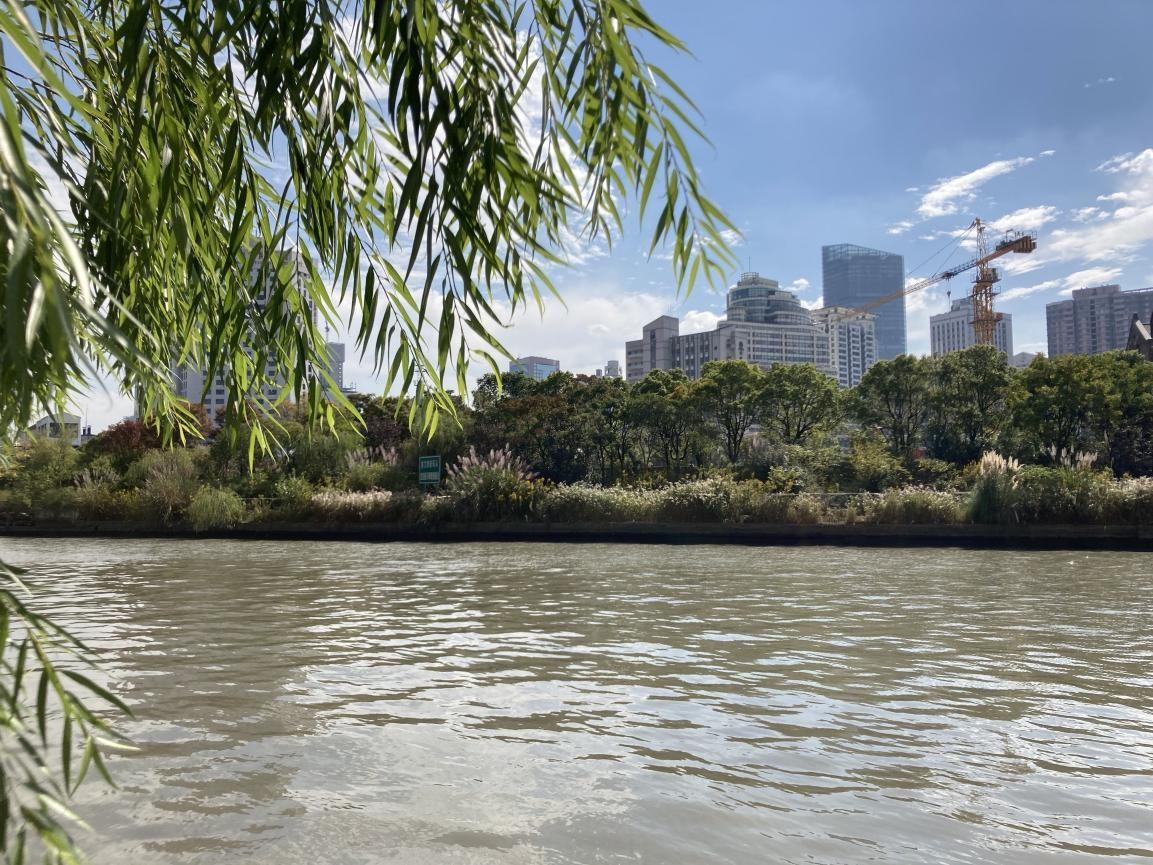 从中远两湾城内的步道遥望苏州河对岸。 澎湃新闻记者 沈健文 摄
