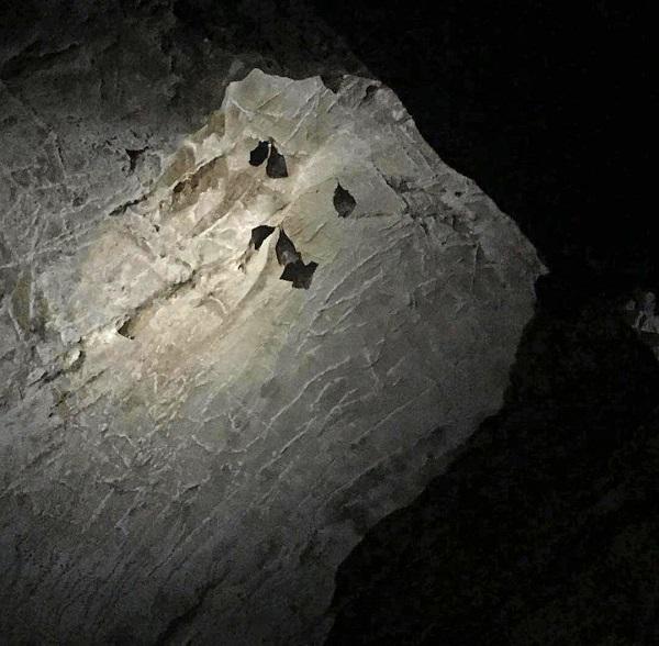栖真洞里的蝙蝠