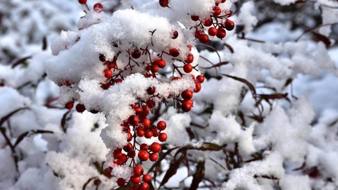 上海今夜降雪,明日全天氣溫將低于0℃