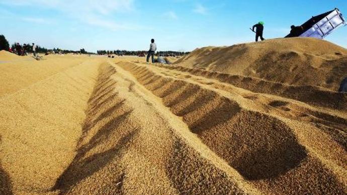 """""""十四五""""糧食年產量確保穩定在1.3萬億斤以上"""