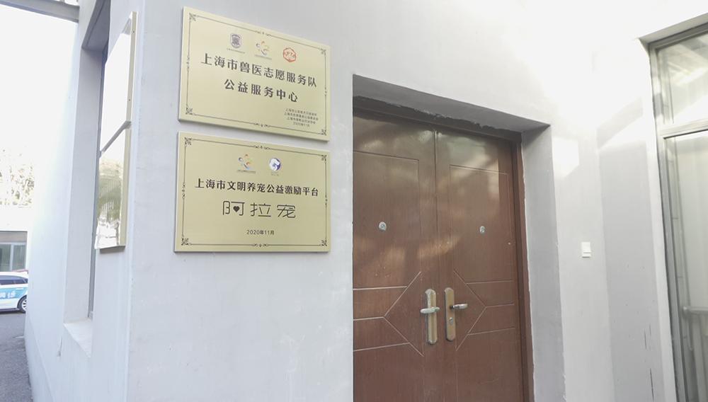 上海小動物救助領養公益服務中心開放,為流浪貓狗免費絕育。