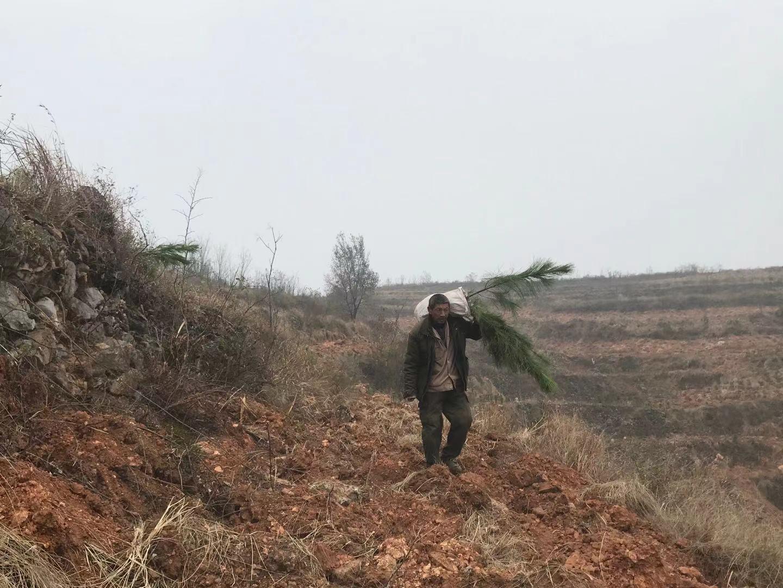 造林工人正在种树。