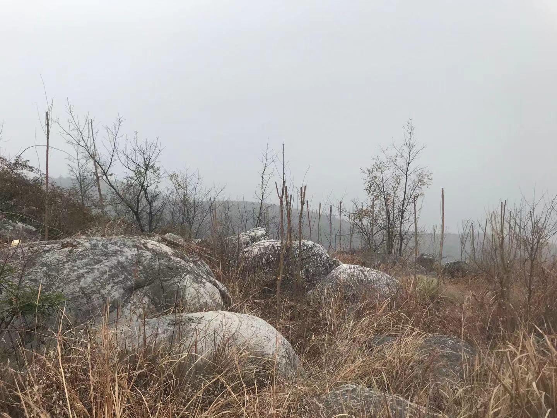 因承担着丹江口水库水源涵养的任务,淅川县正在进行荒山造林。