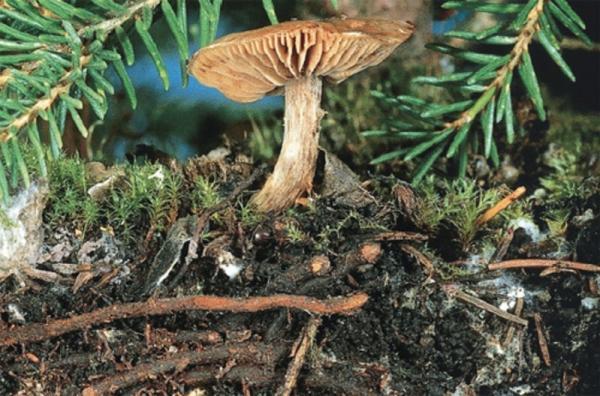 蘑菇与树的共生