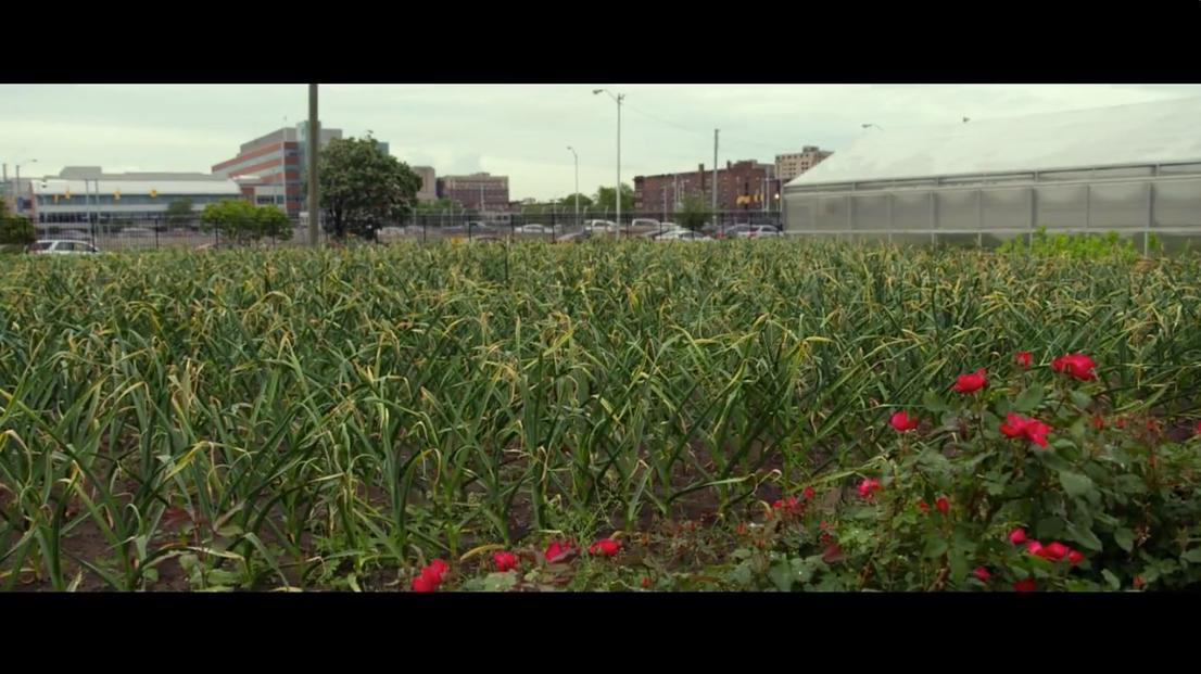 城市中心的农场