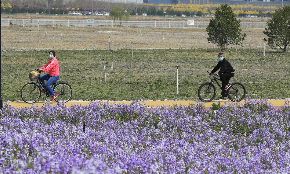 2020年4月5日,石家庄市两名市民在滹沱河生态景区骑车游玩。