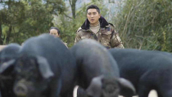 物产中国·昭觉乌金猪|大凉山里40万到400万的裂变