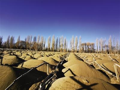 被砍伐的林地大多已完成起垄和整架,用于葡萄种植。记者 李金红 摄
