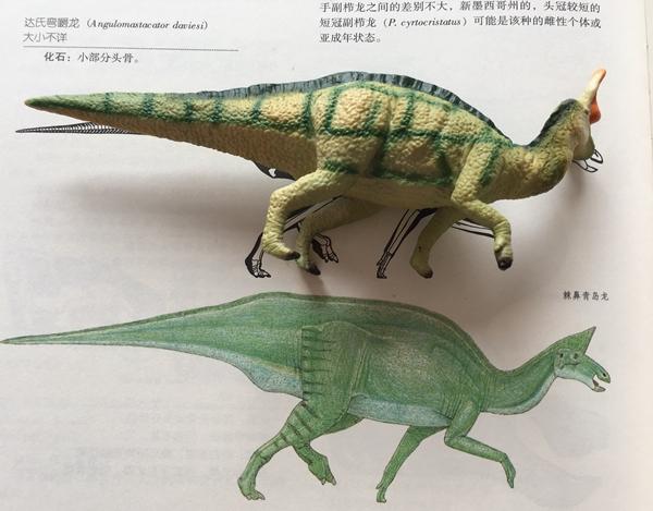 张亮先后为女儿购买了上百只恐龙模型和十几本恐龙图册,发现恐龙玩具里也蕴含着科学发现的成果。