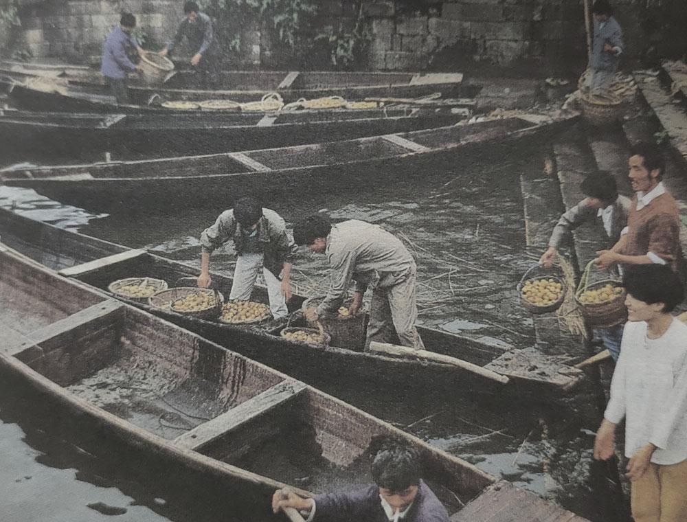 拍摄于80年代末的塘栖镇河埠头,水运枇杷。
