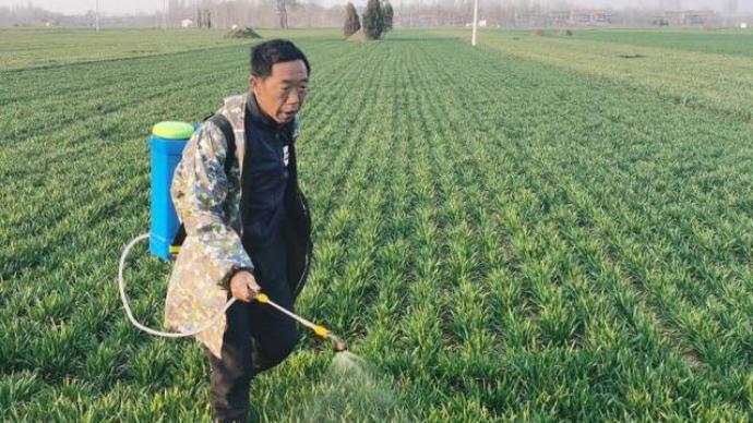 北方冬小麥返青期提前,2月下旬降水利于墑情改善