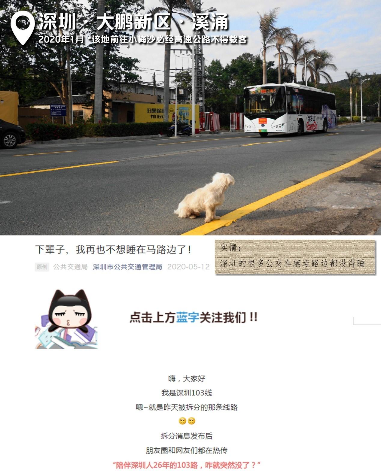 2020年1月,深圳大鹏新区,狗尚且可以躺在路中间晒太阳,它注视的103路却在4个月后因没有场站也不能停路边而取消,但运营单位还将此事选为十大年度高光时刻。