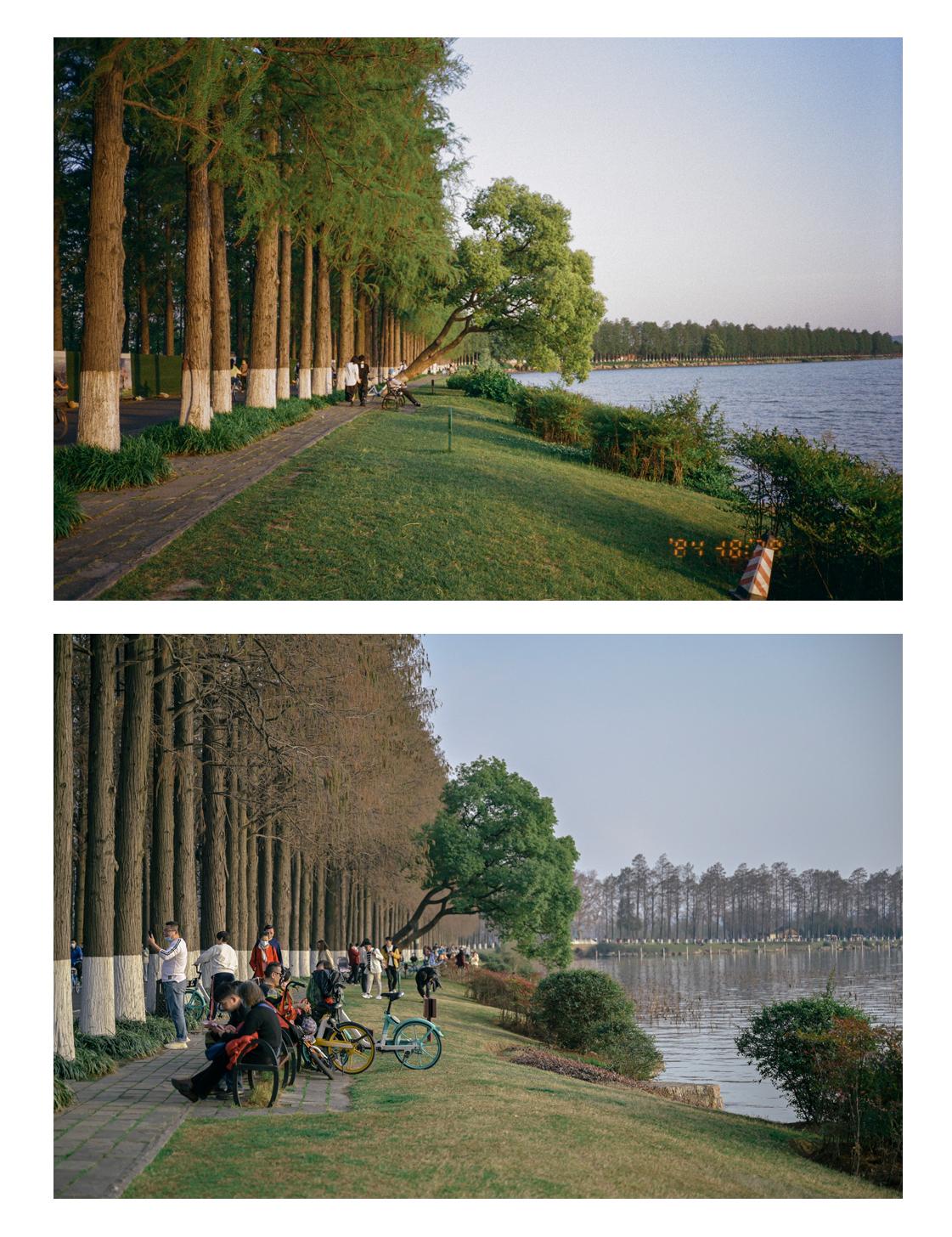 上图:2020年4月26日,武汉,东湖。 下图:2021年2月13日,武汉,东湖。
