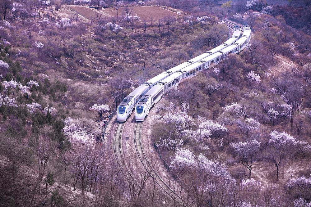 """2019年3月31日,北京市昌平区,居庸关景区附近,两辆相向而行的和谐号在""""S形""""弯道处相遇,在花海中呈并驾齐驱、齐头并进之势,好似争先恐后驶向春天,可谓开往春天的列车。"""