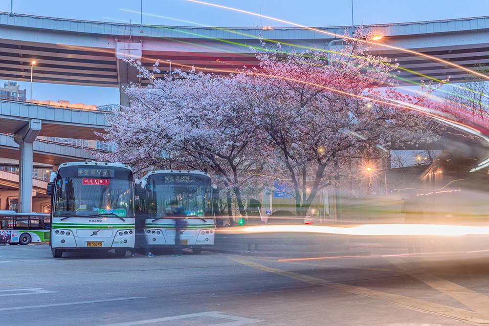 """2018年3月30日,上海南浦大桥的公交车站站内樱花盛开,美不胜收,被网友誉为上海""""最美公交车站"""",每年这个时节,总会吸引很多来客驻足拍摄。"""