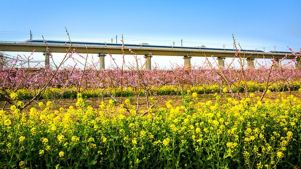 2020年3月20日 ,一辆从西安方向开过来的高铁,即将驶入山西运城北站,经过盐湖区城边一片田野,黄灿灿的油菜花、盛开的桃花与高速驶过的列车,构成了一幅春意盎然的美好画卷。
