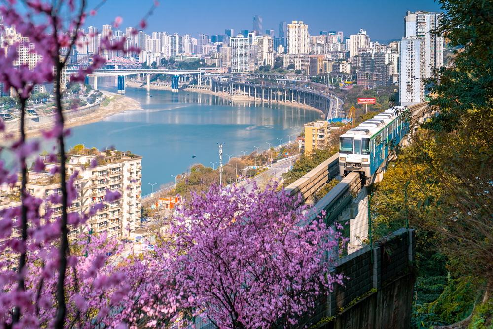 2021年2月20日,重庆渝中区佛图关段,列车穿越花海。