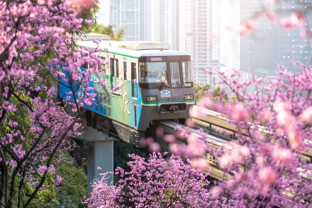 2021年2月20日,重庆渝中区佛图关段,列车花海穿行宛如画卷。