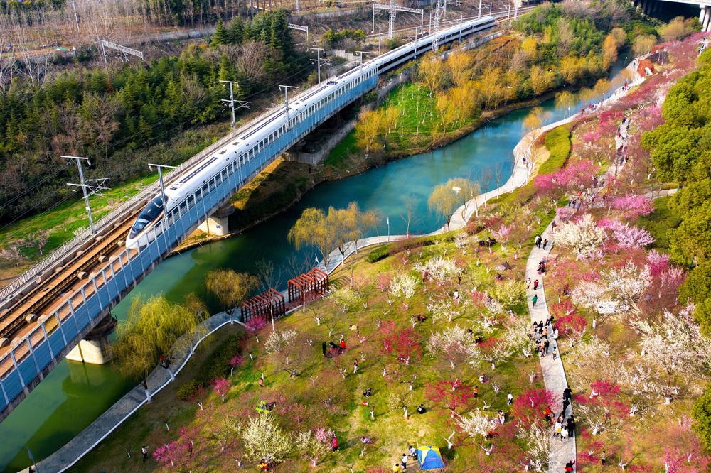2021年2月14日,安徽合肥,匡河公园的梅花盛开,一列复兴号列车从梅花林边驶过,犹如驶入春天的花海。