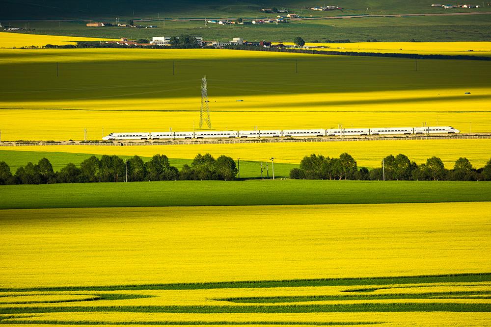 2020年7月12日,青海门源,一辆高铁正在油菜花田间穿梭。
