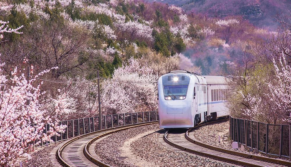 2019年3月27日,北京居庸关,火车行驶在花海中。