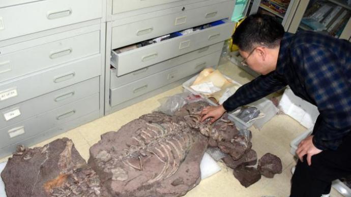 中国发现2.5亿年前九峰吐鲁番兽,系首个跨热带温带分布二齿兽