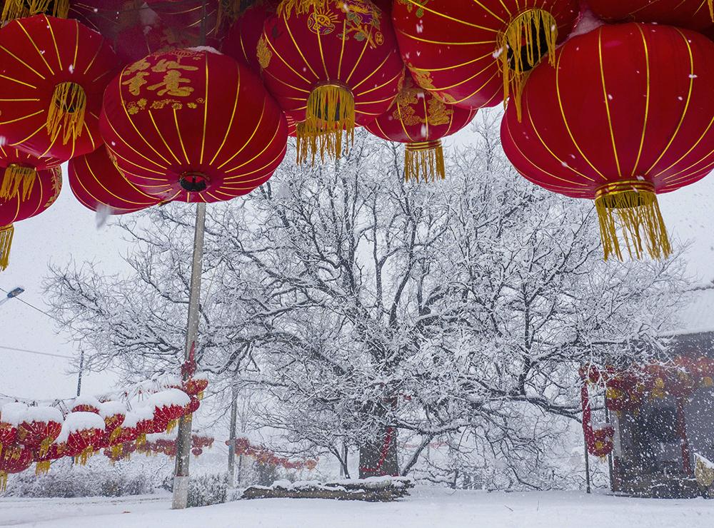 2021年2月24日,山西运城稷山县,晋村大槐树银装素裹,在大红灯笼下的映衬下,美轮美奂。