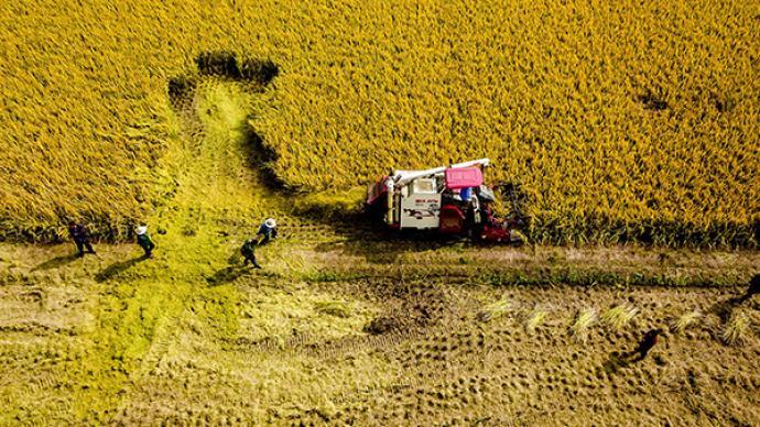 农业农村部:打好种业翻身仗,启动重点种源关键核心技术攻关