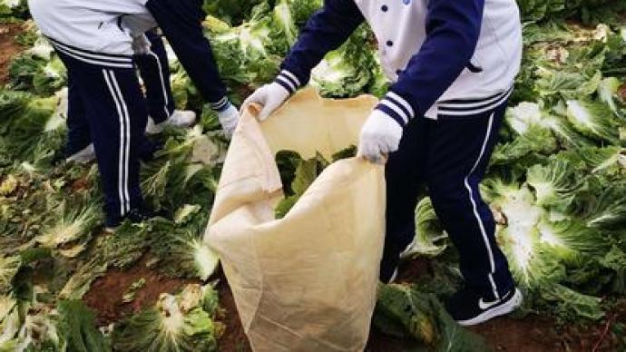 安庭委员:建议鼓励大中小学定期开设学农类实践活动