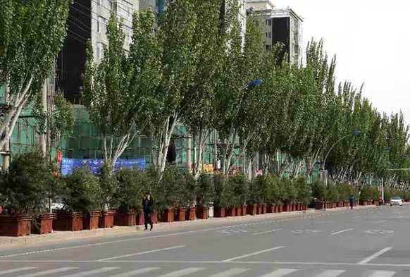 这是当年摆放在市区街道上的木桶树。资料照片
