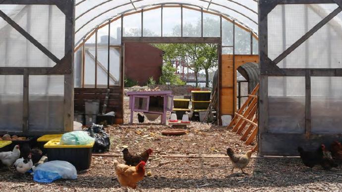 食物規劃|紐約食物向前⑥:讓食物體系可持續,助力碳中和