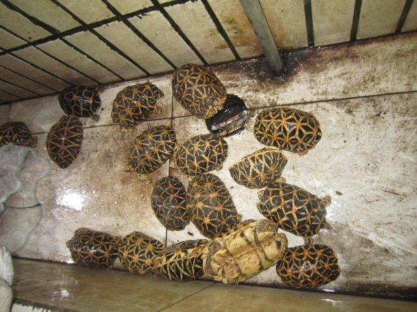 2017年3月,深圳海关截获165只活体濒危龟和71只活体剧毒蝎子。