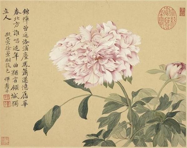 清 恽寿平 《摹古册》之牡丹 台北故宫博物藏