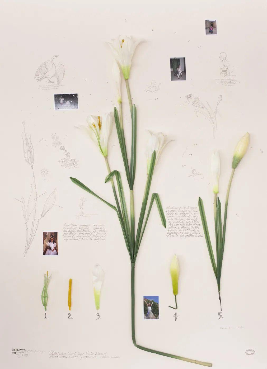 阿尔贝托·巴拉亚,《初领圣体百合》,2015,塑料假花(中国制造),摄影和绘画,背裱纸板,木框装裱,85 x 116 x 7 cm。艺术家供图。