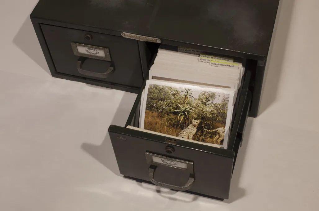 阿尔贝托·巴拉亚,《在地档案》,2003 -2020,金属档案盒,已归类并作标记的彩印相片约2000张,金属盒:51 x 45 x 18 cm,相片:10 x 15 cm。艺术家供图。