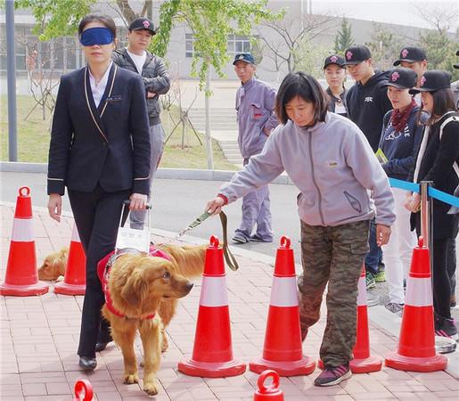大连基地里的导盲犬训练图据人民政协网
