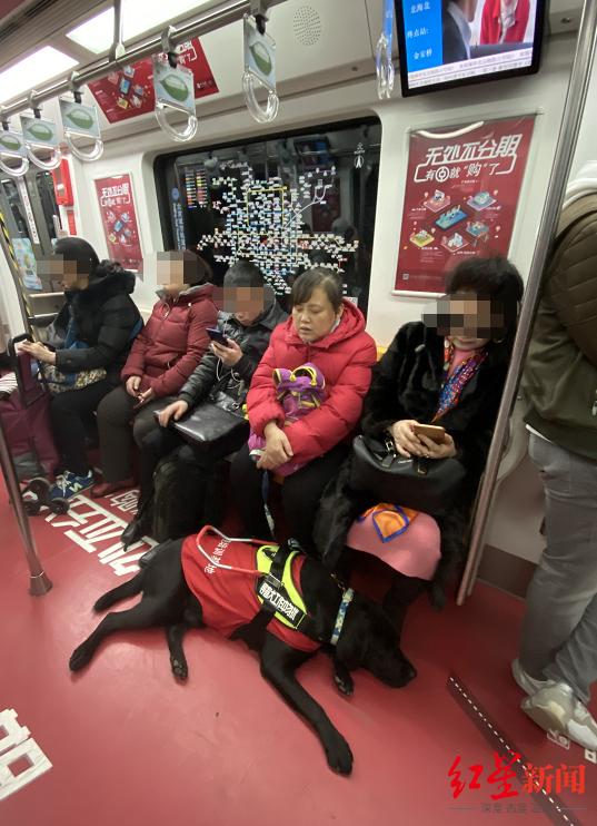 陈燕和她的导盲犬萌萌在地铁里